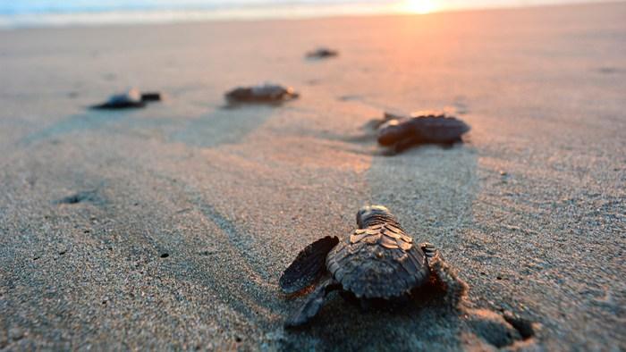 Playa Cazones