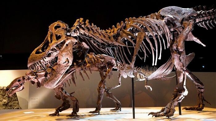 Museo de Ciencias Naturales de Houston