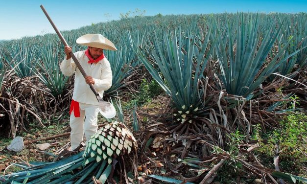 Tequila Jalisco: 11 Cosas que hacer