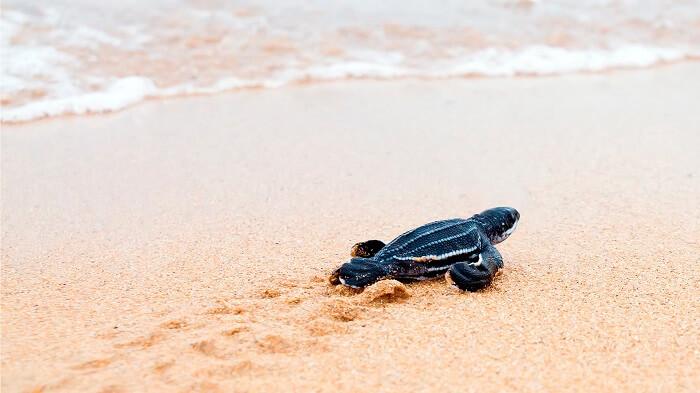 Playa Tortuga en Cuba