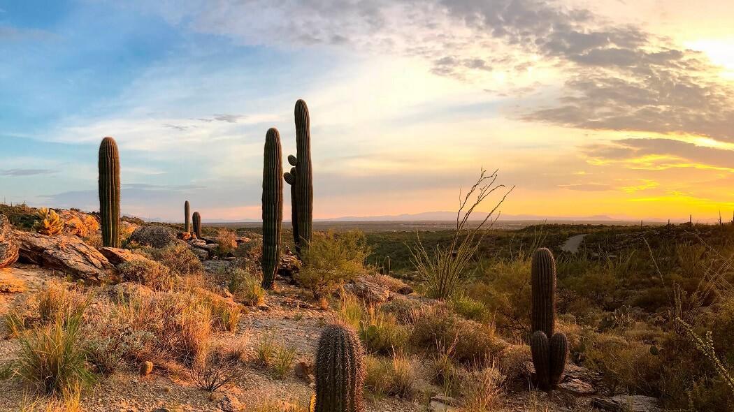 12 Lugares para visitar en Hermosillo
