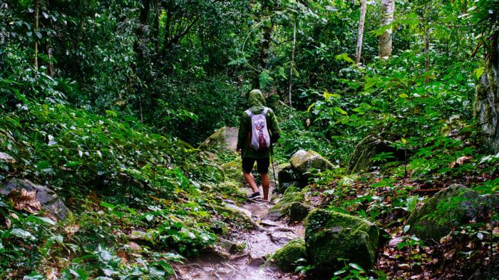 caminata selva cozumel