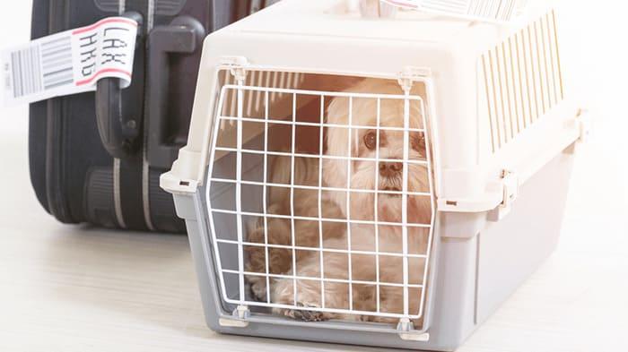 transportadora mascotas