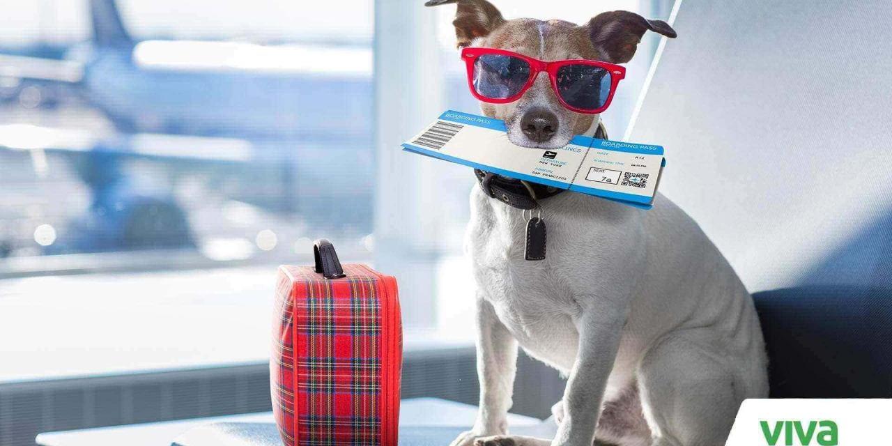 Transporte de mascotas en avión: tips para volar