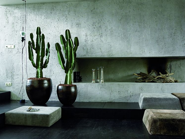 ON TREND: SUCCULENTS AND CACTI FOR INTERIORS ⋆ Vkvvisuals
