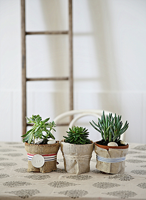 Succulents and cacti for interiors by VKV Visuals