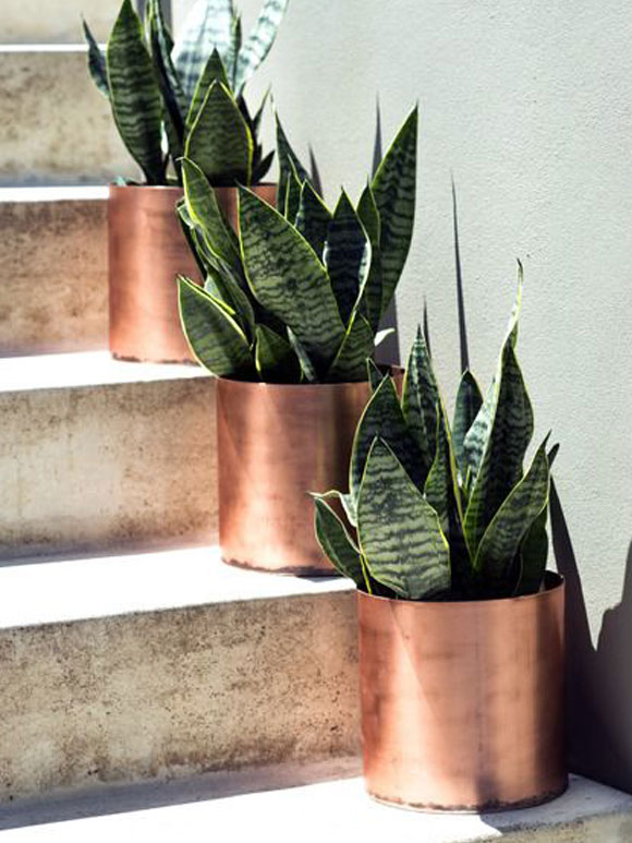 Seventies Sanseverias in red brass pots - via My Simply Special