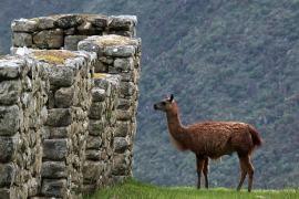 peru min Volunteer In Peru   The Ultimate Guide