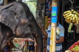 Shopping with the elephants 2 min min With Love and Respect   How to Stand Up for Animal Rights