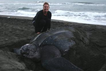 Pacuare Leatherback big min Things you can do to save leatherbacks sea turtles