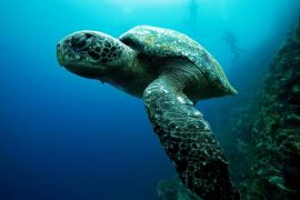 Protect Sea Turtles FI e1461659627629 Top 10 Countries to Volunteer Abroad [Updated 2020]