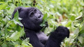 Destinations Uganda