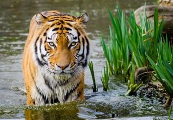 volunteer in wildlife conservation