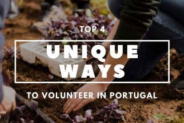 Copy of Copy of Copy of How to Save the Leatherback Sea Turtle 4 Unique Ways to Volunteer in Portugal   Get the Best Insights by ImpacTrip Portugal