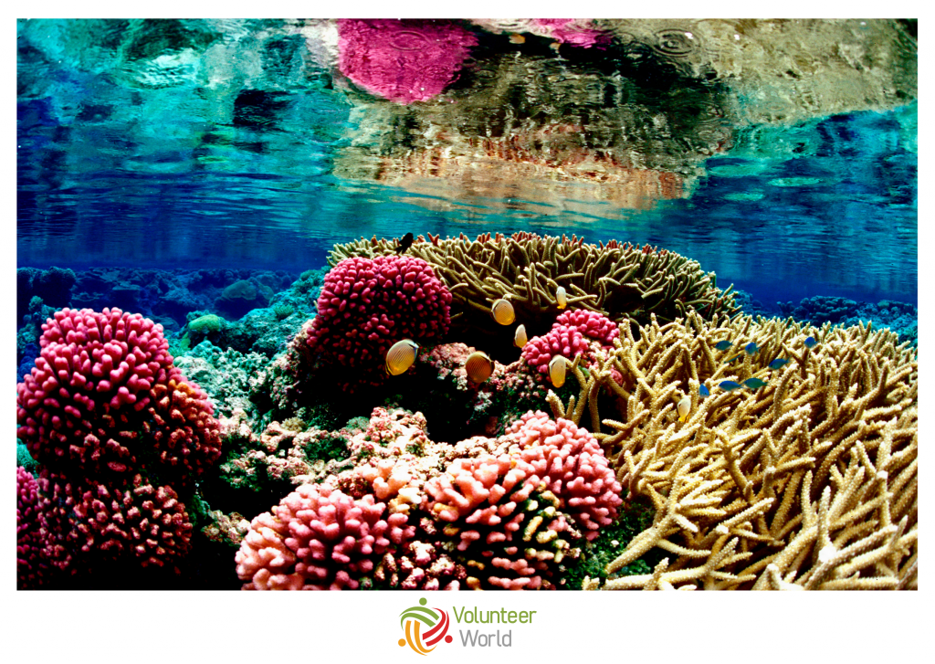 coral reef with different colors under water