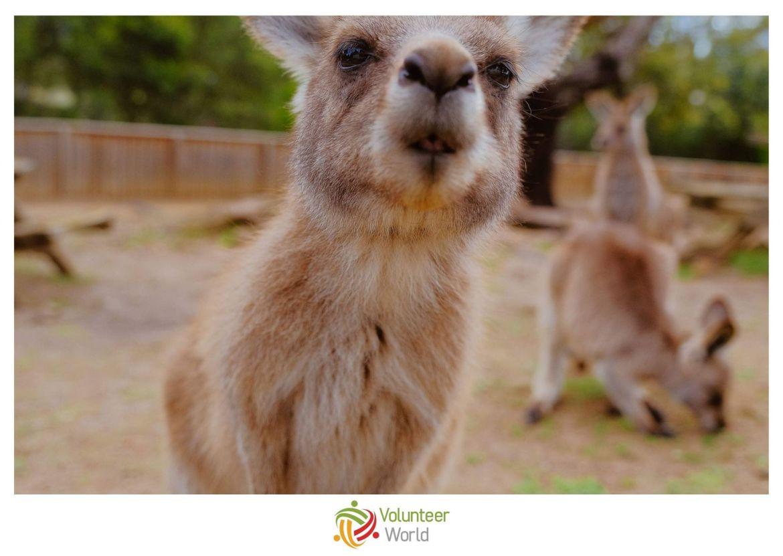 Volunteer in Australia