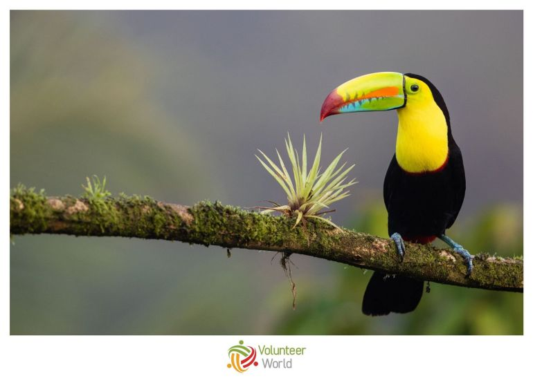 Costa Rica min Best Places to Volunteer Abroad in July [Updated 2020]