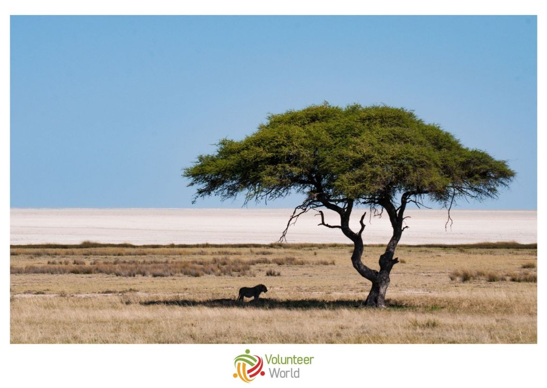 Volunteer Namibia