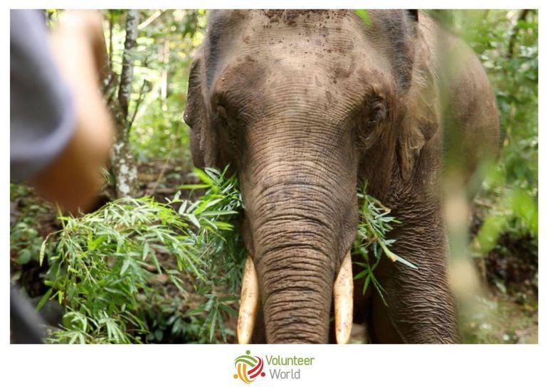 Volunteer in Thailand min Best Places to Volunteer in September [2021]