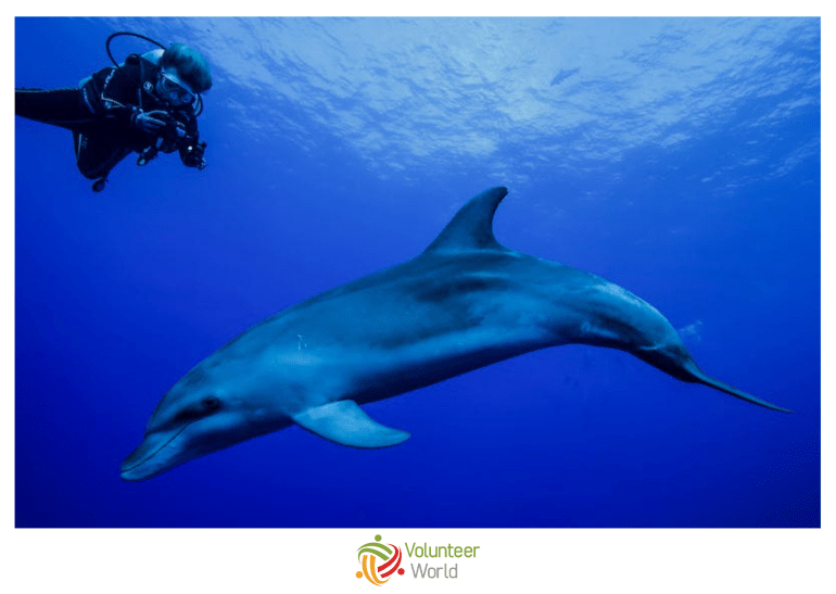 dolphin conservation volunteer in italy