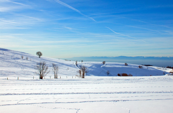 Winter landscape in the Black Forest