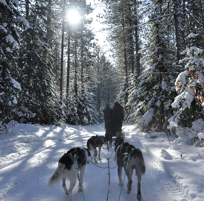 FAMILY TRAVEL: Dog Sledding with Kids in TOw