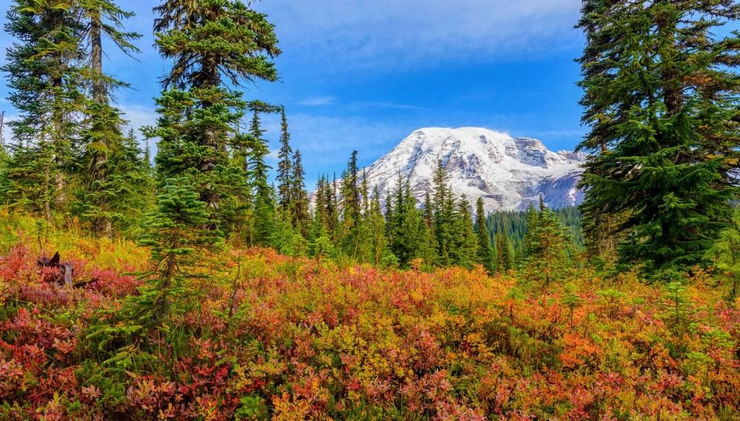 Fall colors at Mount Rainier