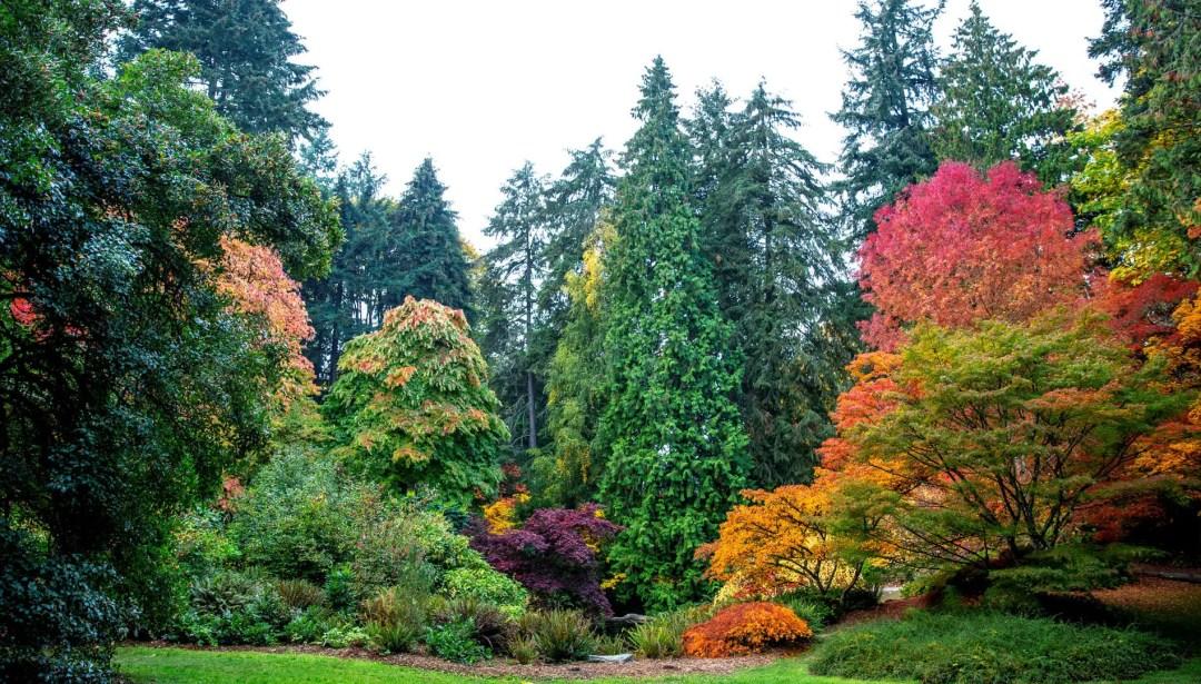 Fall colors at Washington Arboretum