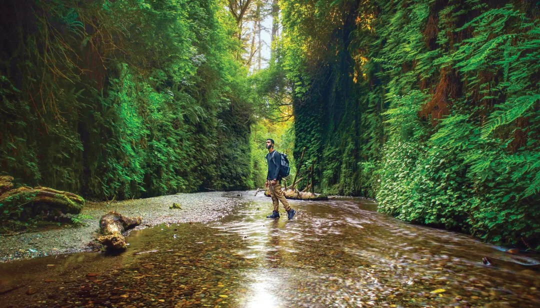 Fern Canyon in California's Prairie Creek Redwoods State Park