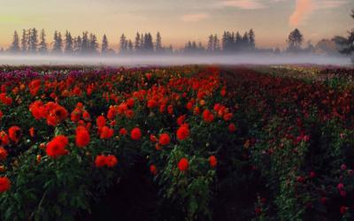 Great Northwest Gardens