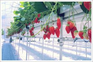 高設養液栽培システム