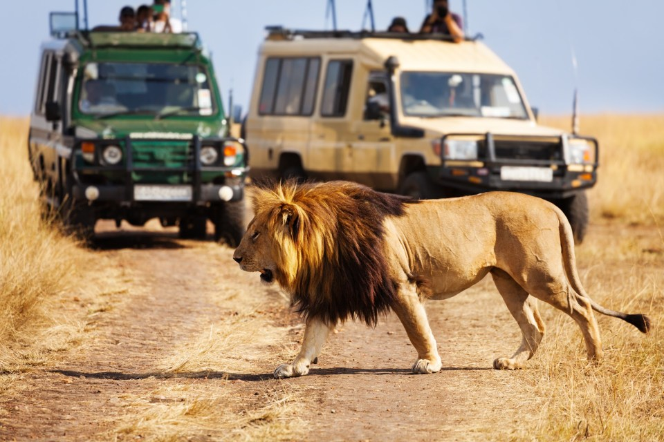 5 Best Christmas Destinations in Africa