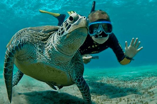Snorkelling in Cape Verde