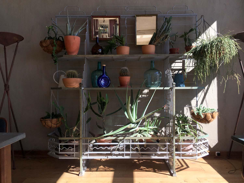 Cacti on elaborate ironwork shelving
