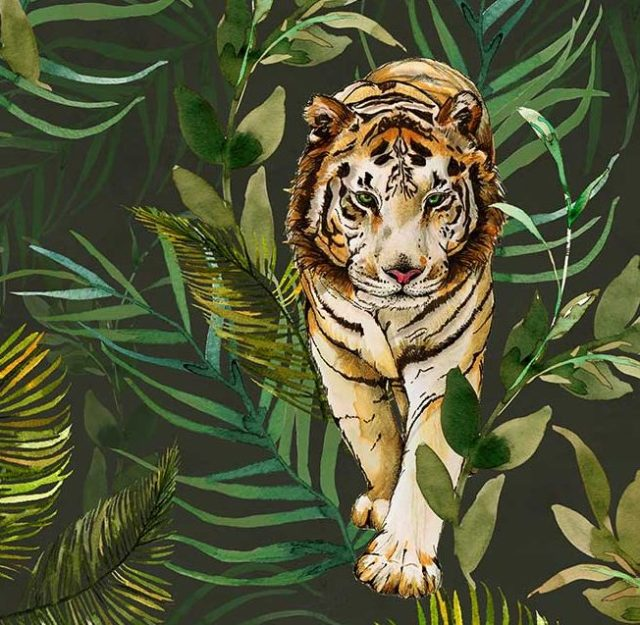 The Graduate Collection - Prowling jungle tiger