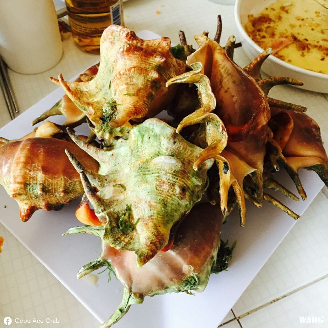 cebu-streetfood-saang-conch-spider-shell