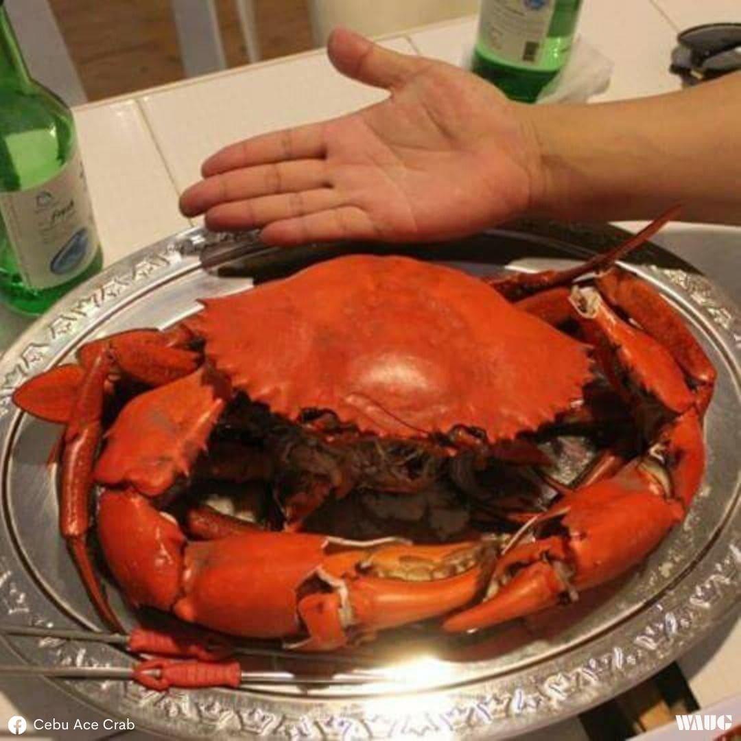 cebu-seafoods-crab