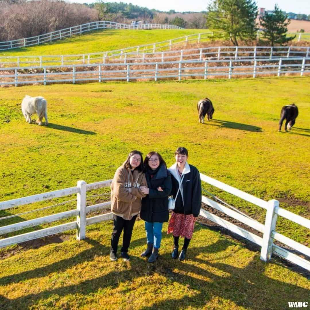 Jeju Tour - Jeju Pony Range