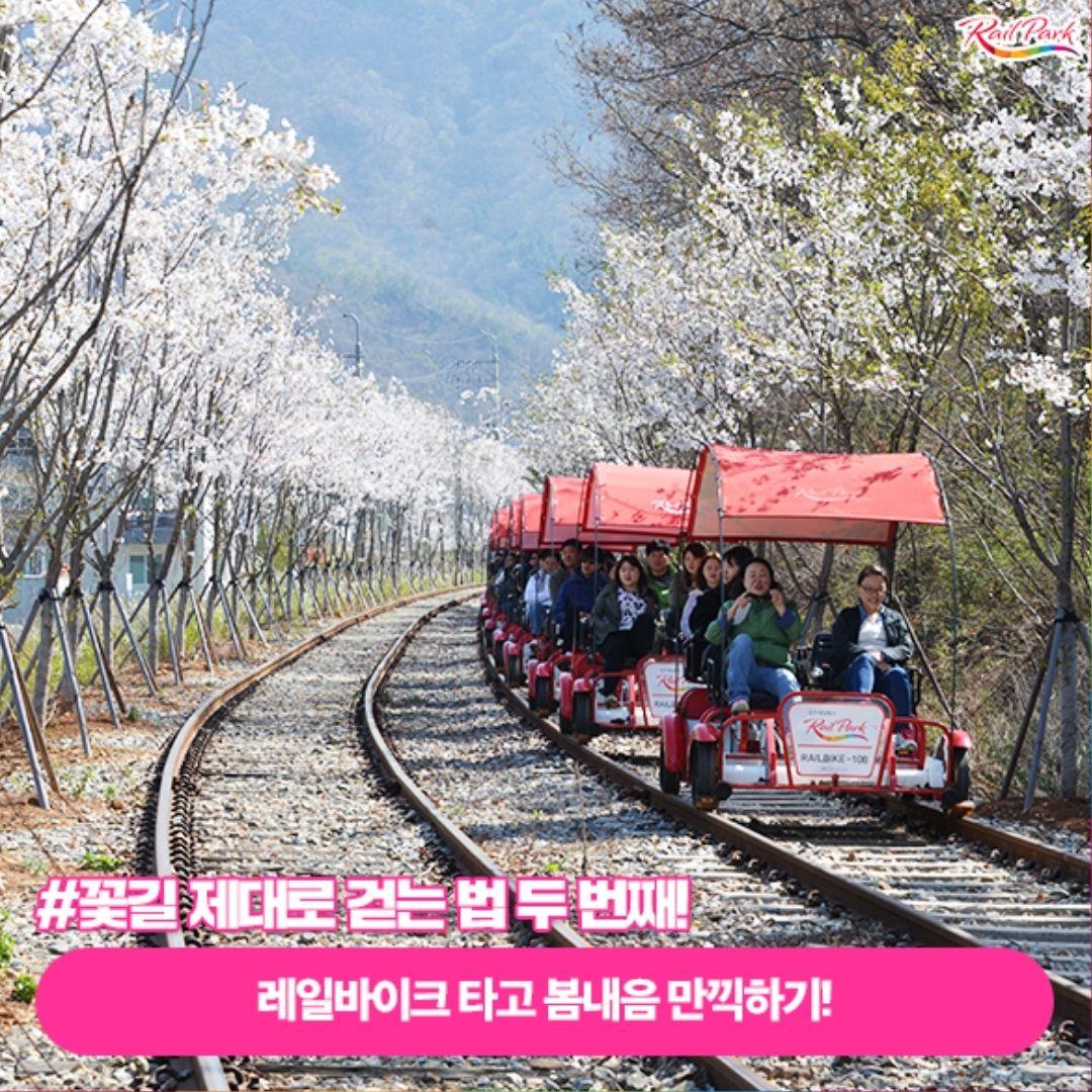 gangchon-rail-park-spring
