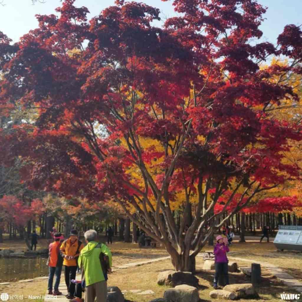 nami-island-autumn