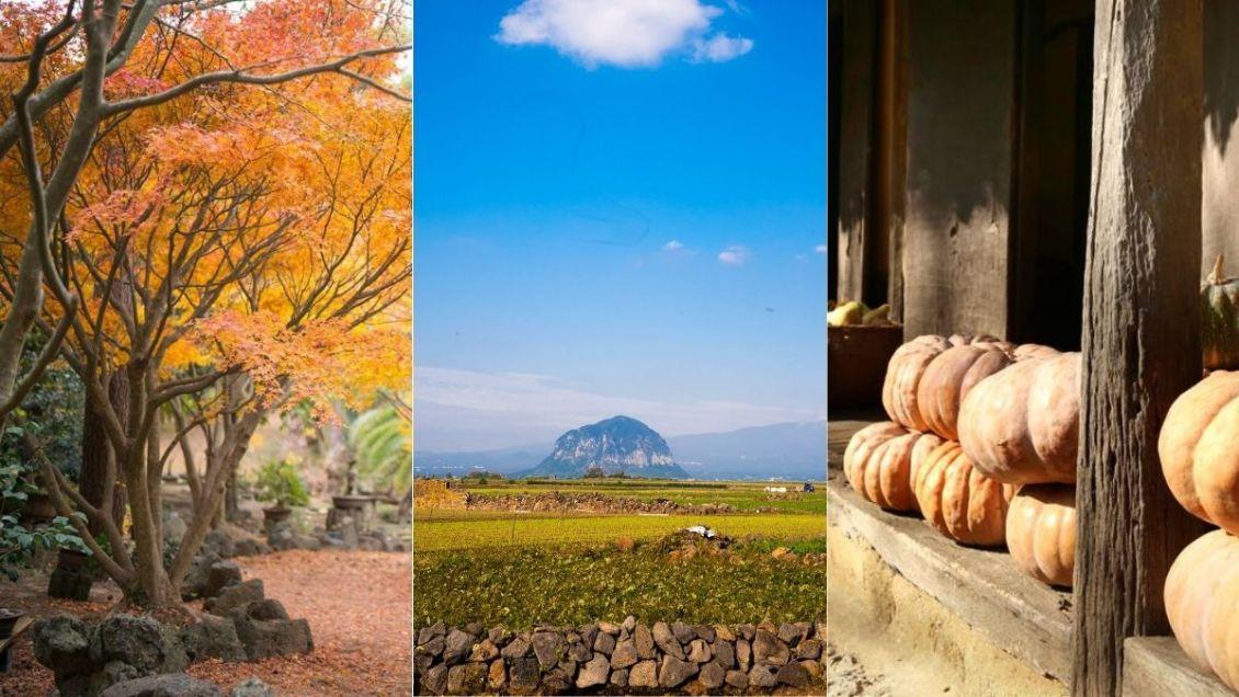 jeju-island-autumn