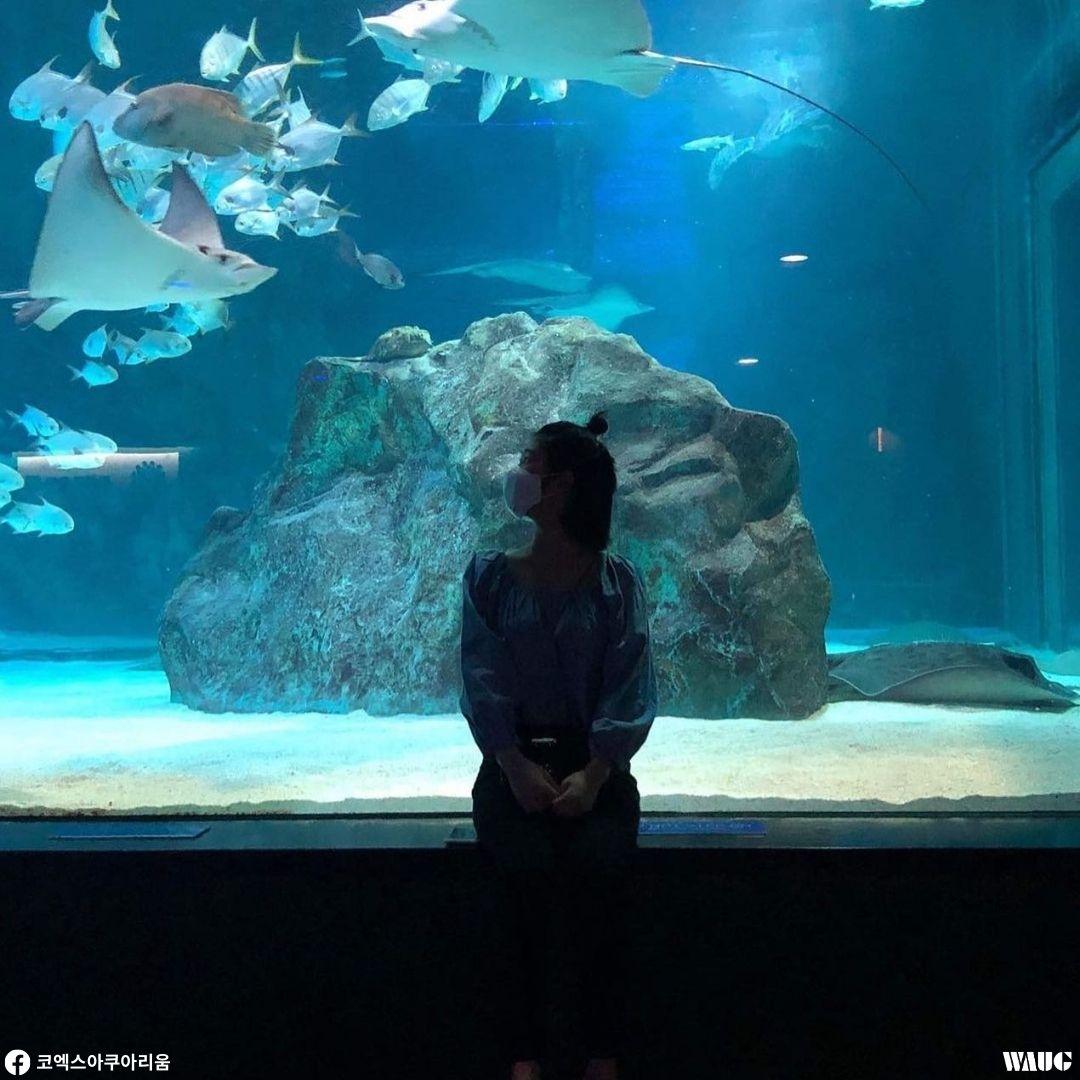 things-to-do-christmas-korea-coex-aquarium-2