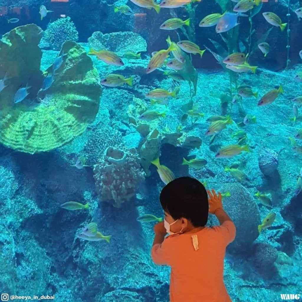 Dubai aquarium ticket offer