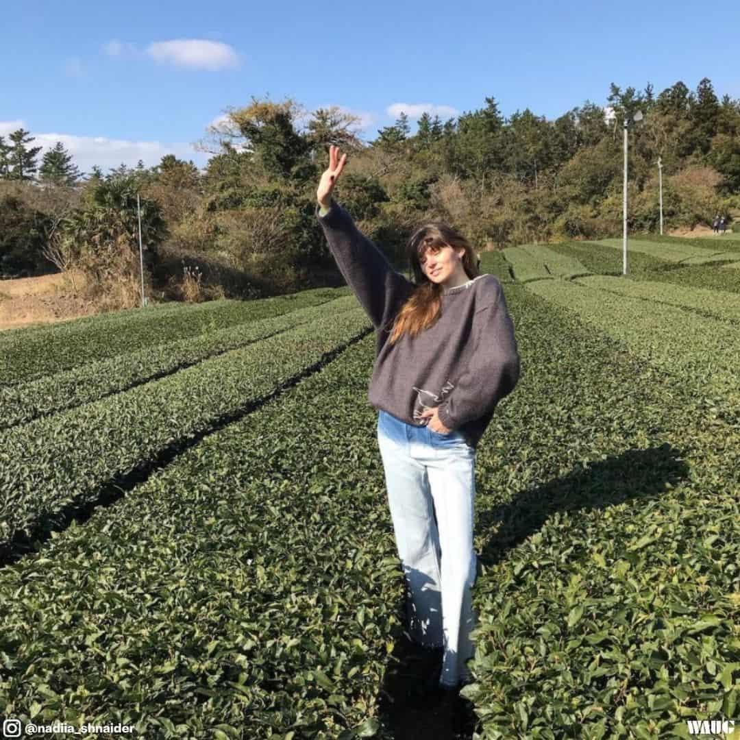 Osulloc jeju tea gardens