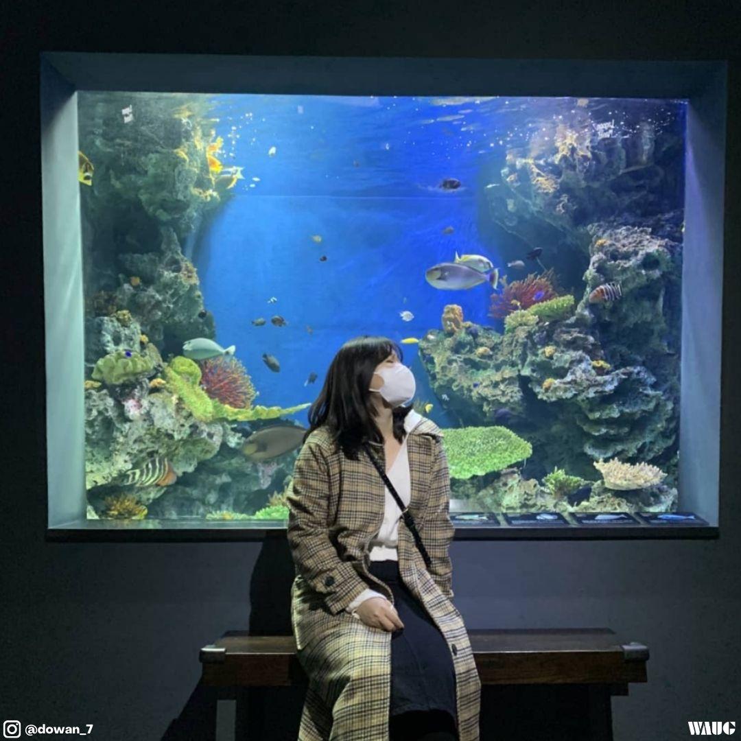 aqua-planet-63-aquarium-seoul