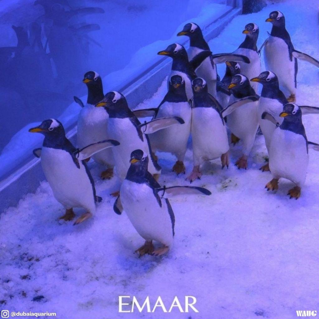 dubai-aquarium-penguin
