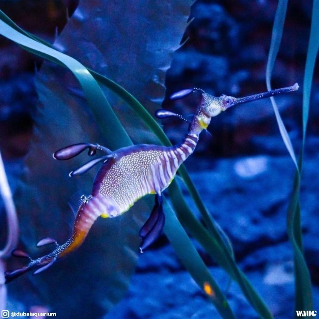 dubai aquarium & underwater zoo ticket