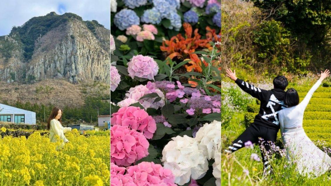 jeju-spring-itinerary
