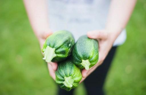 Micronutrients in zucchini