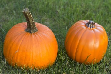 WHICHCRAFT: 3 ways to fix up faux pumpkins